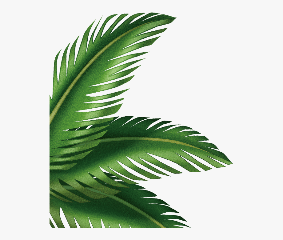 Leaf Arecaceae Clip Art Transprent Png Free Ⓒ.