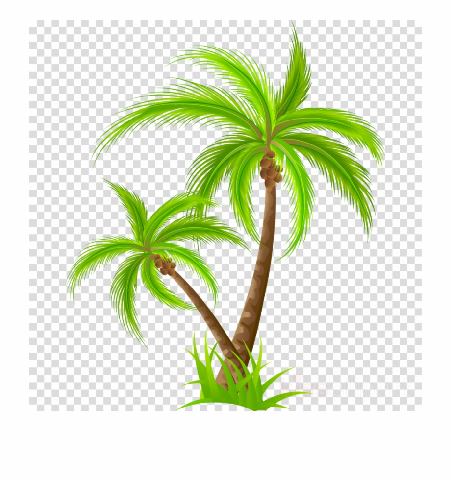 Download Palm Tree Png Clipart Palm Trees Clip Art.