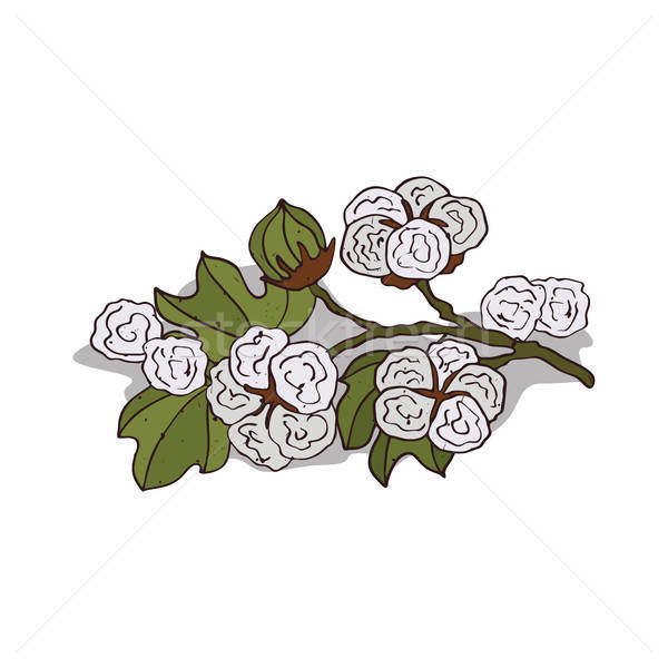 Clipart pamuk meri clipart images gallery for free download.