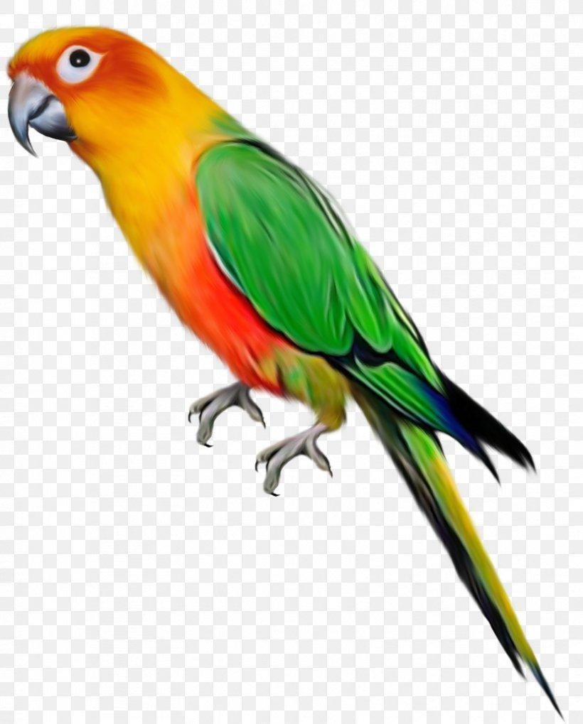 Parrot Bird Clip Art, PNG, 828x1029px, Parrot, Beak, Bird.