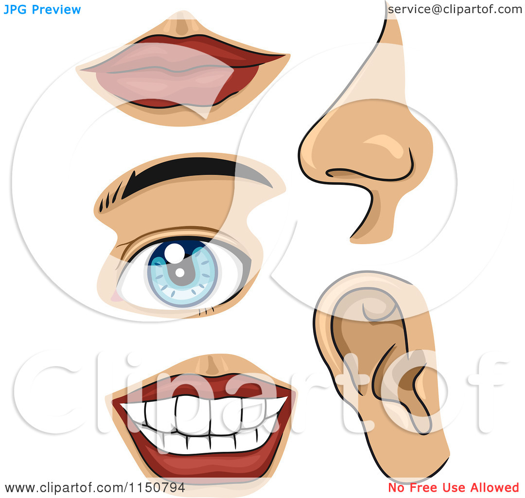 Clipart Part Of Body Clipground