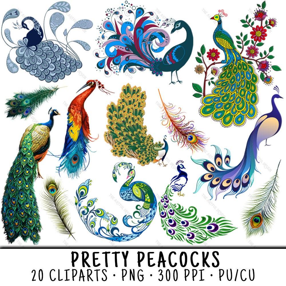Peacock Clipart, Bird Clipart, Peacock Clip Art, Bird Clip Art, Peacock  PNG, PNG Peacock, Clipart Peacock, Clipart Bird, Peacock Feathers.