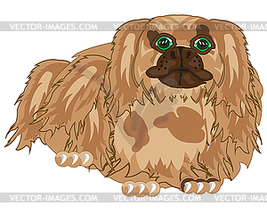 Dog of sort pekingese.