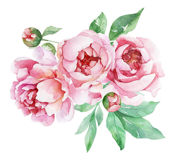 Peonies clipart 2 » Clipart Station.