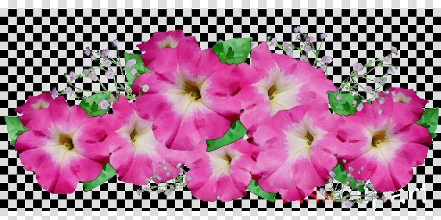 flower pink petal petunia plant clipart.