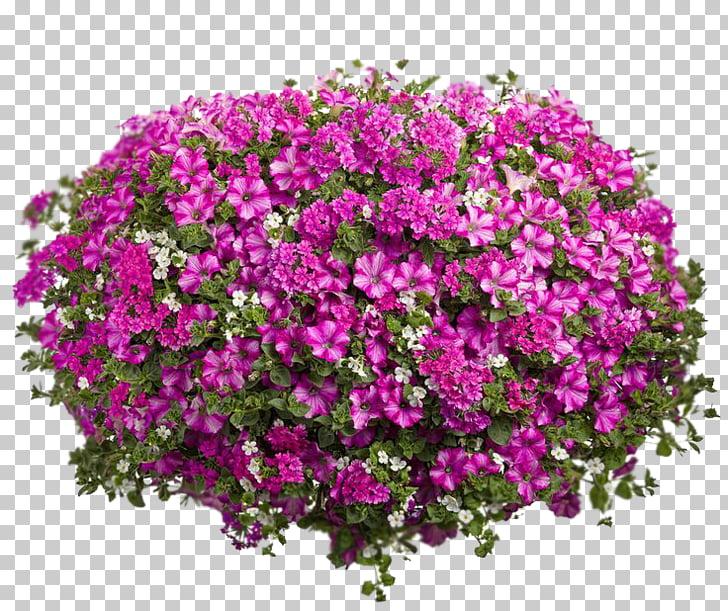 Flower Petunia Hanging basket Rhapis excelsa Houseplant.