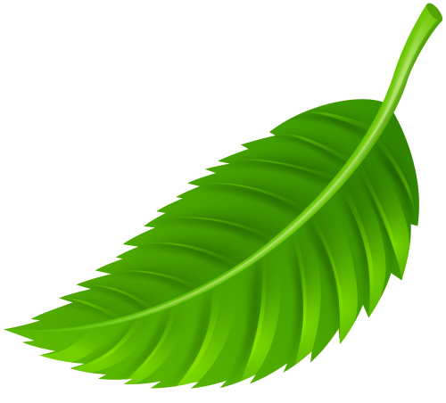2 clipart leaf, 2 leaf Transparent FREE for download on.