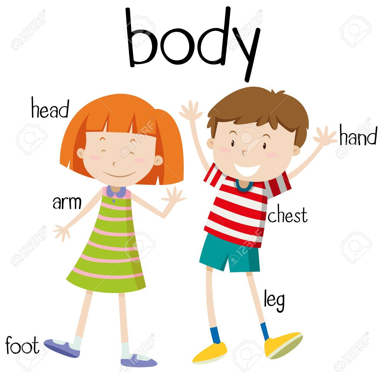 Human body parts diagram illustration.