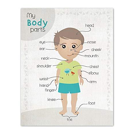 Buy Children Inspire Design Kid's Room Decor Body Parts Clipart For.