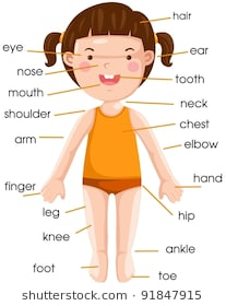 Parts of body clipart » Clipart Station.