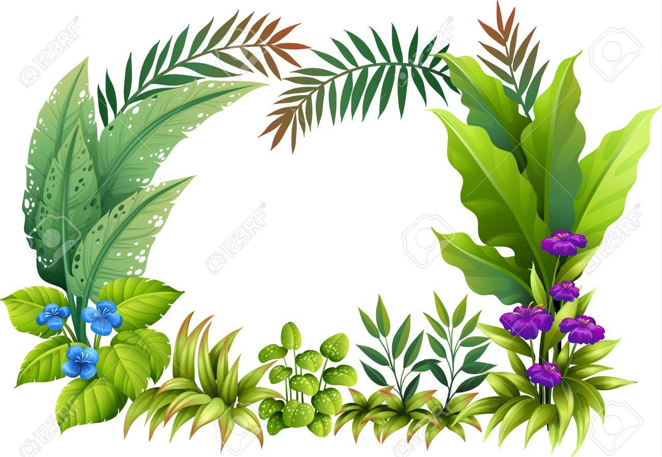 Illustration of plants and flowers on a white background.