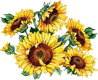 Beautiful clipart sunflowers.