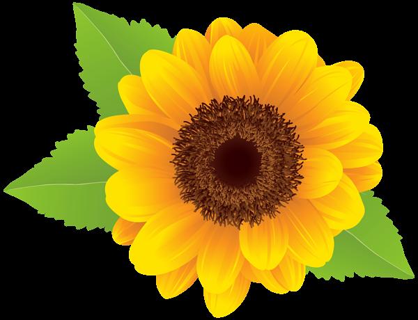 101+ Sunflower Clipart.