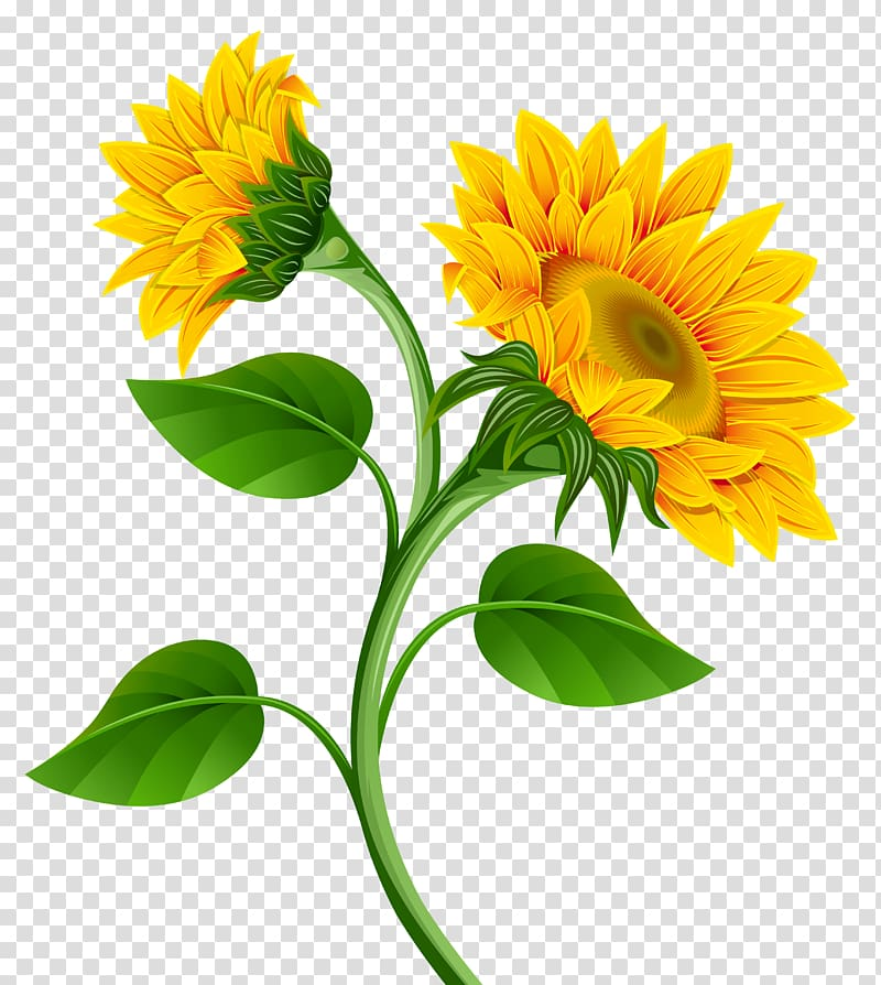 Common sunflower Pixel, Sunflowers , sunflowers illustration.