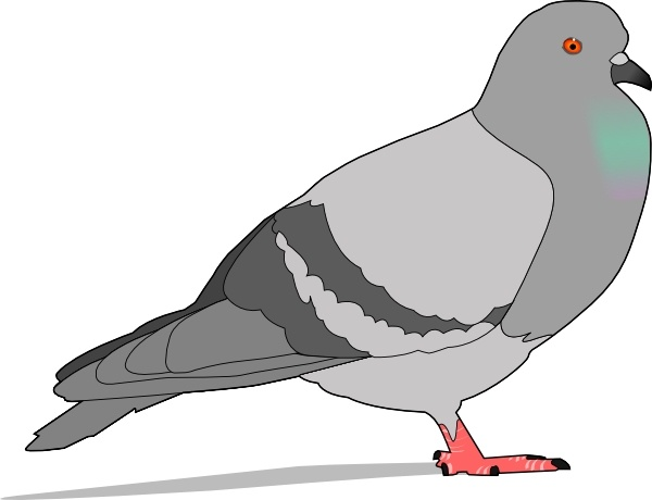 Pigeon clip art Free vector in Open office drawing svg.