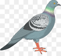 Pigeon clipart pidgeon, Pigeon pidgeon Transparent FREE for.