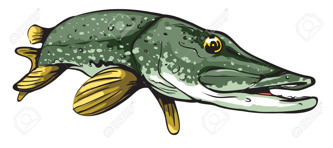 Pike fish.