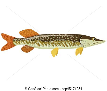 Northern pike Vector Clip Art Illustrations. 55 Northern pike.