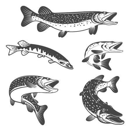Northern pike clipart 3 » Clipart Portal.