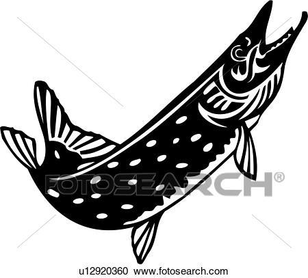 , animal, fish, northern pike, ocean, species, Clipart.