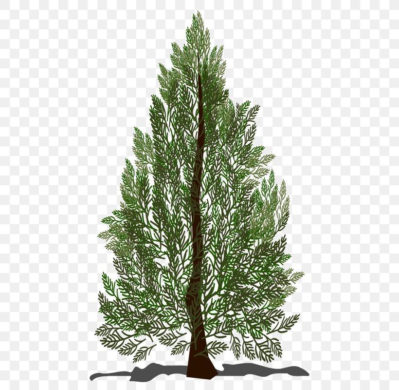 Pine Spruce Fir Tree Clip Art, PNG, 800x800px, Pine, Biome.