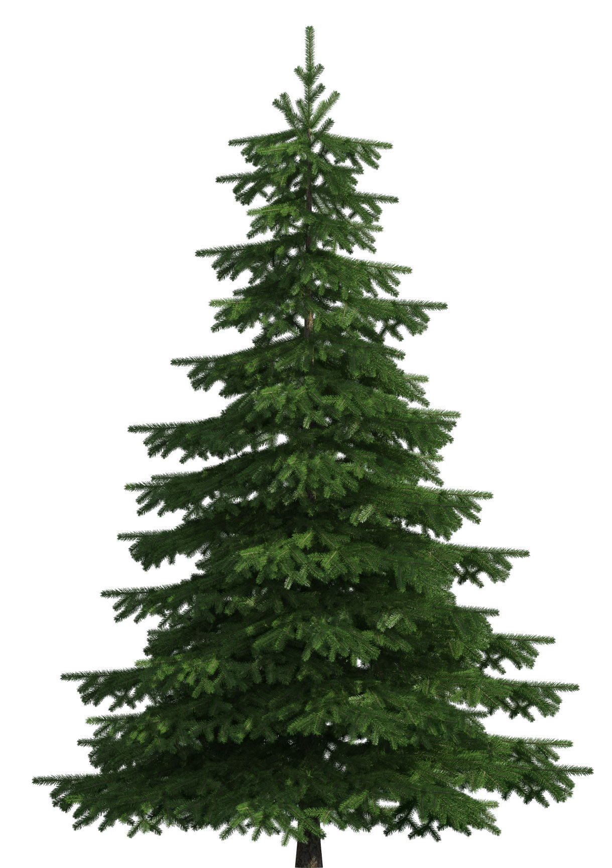 Realistic Pine Tree PNG Clip Art.