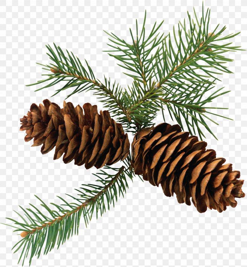 Pine Conifer Cone Branch Fir Clip Art, PNG, 2683x2896px.