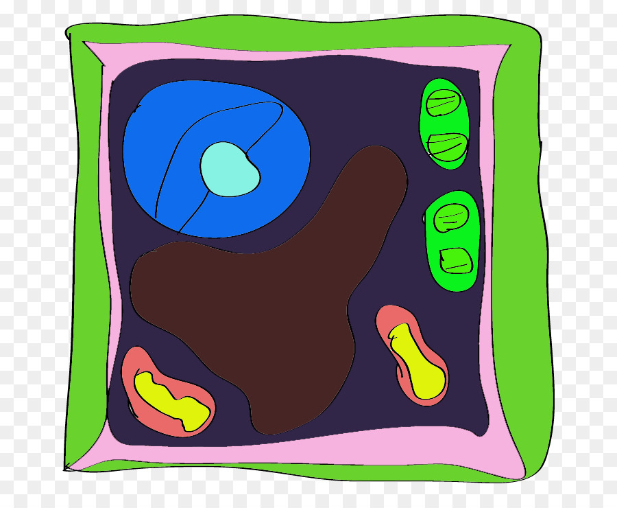 labeled plant cell clipart Textile Clip art clipart.