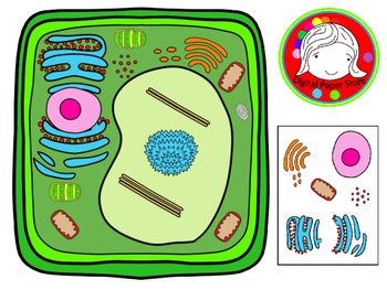 Plant Cell and Organelles Clipart (Personal & Commercial Use).