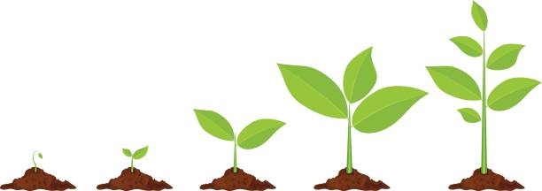 Plant growing clipart 5 » Clipart Station.