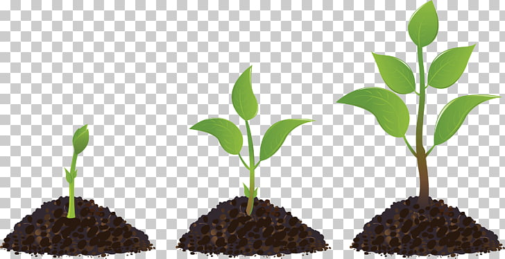 Seedling Sprouting Drawing, plant, growing plant.