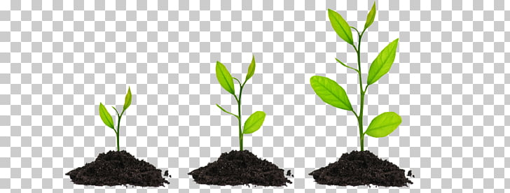 Plant Seed Bonsai Tree , Plant GROWING PNG clipart.