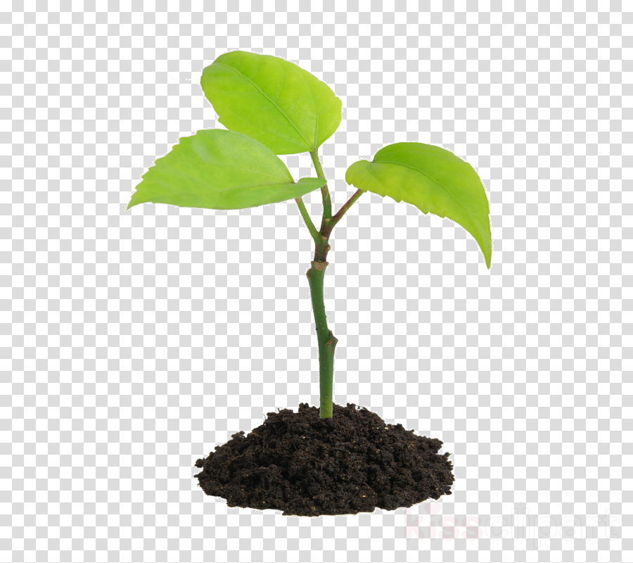 Orange Tree clipart.