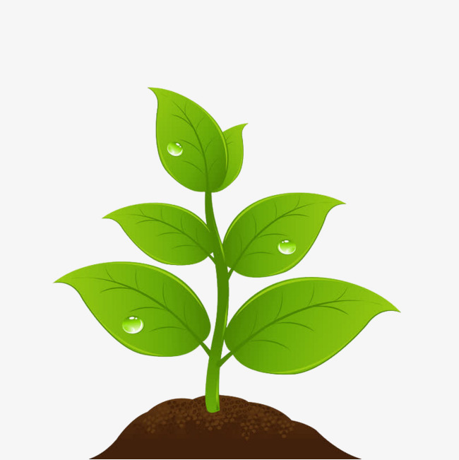 Plant clipart png » Clipart Station.