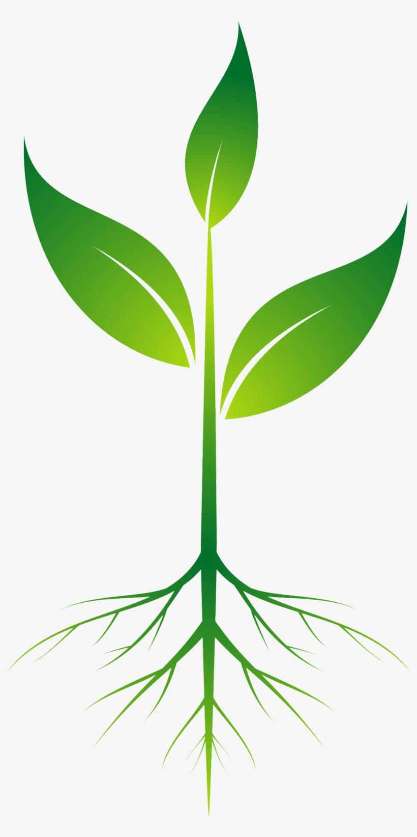 Root Plant Clip Art.