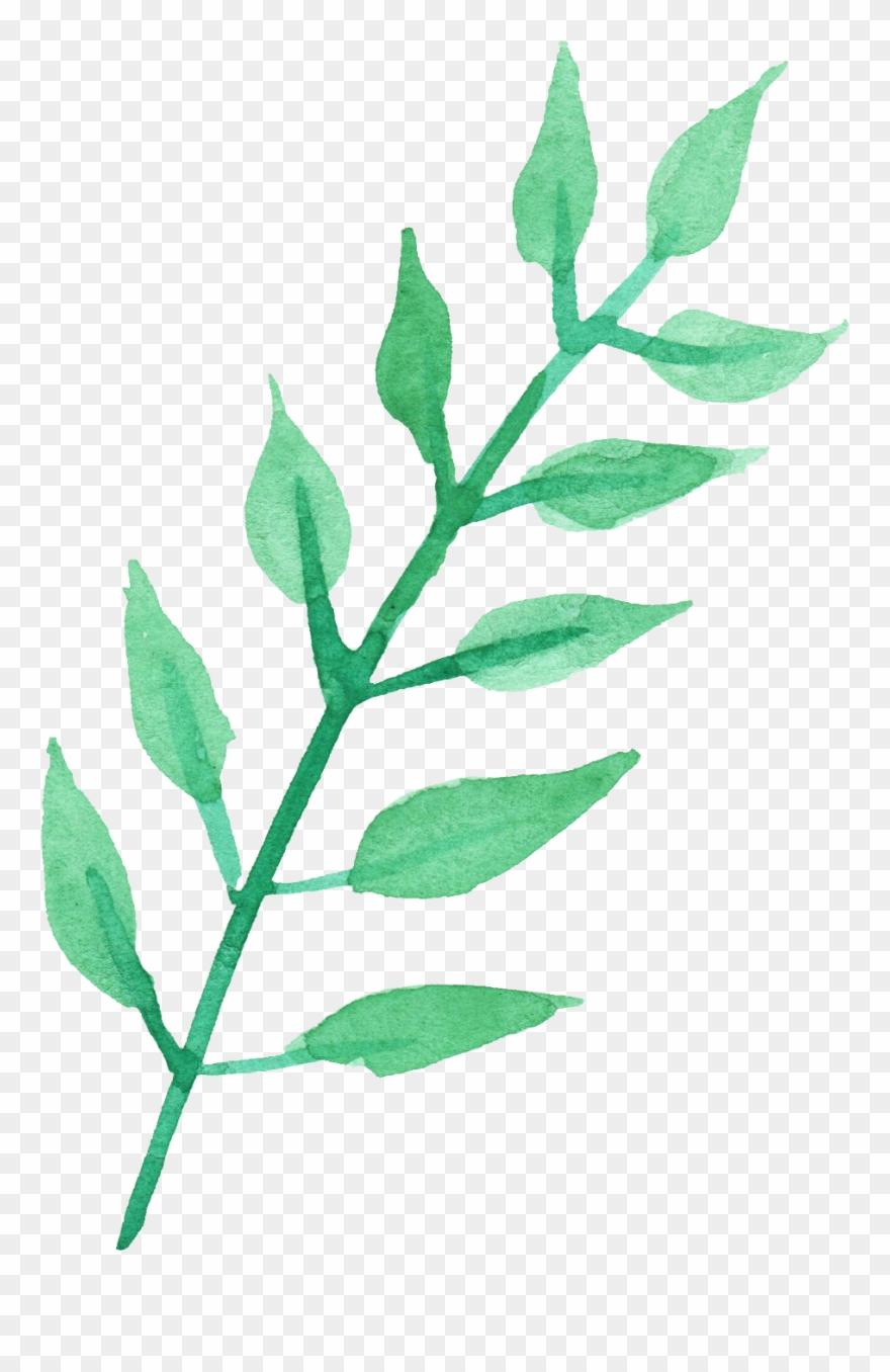 Stem Of A Plant Png Transparent Images.