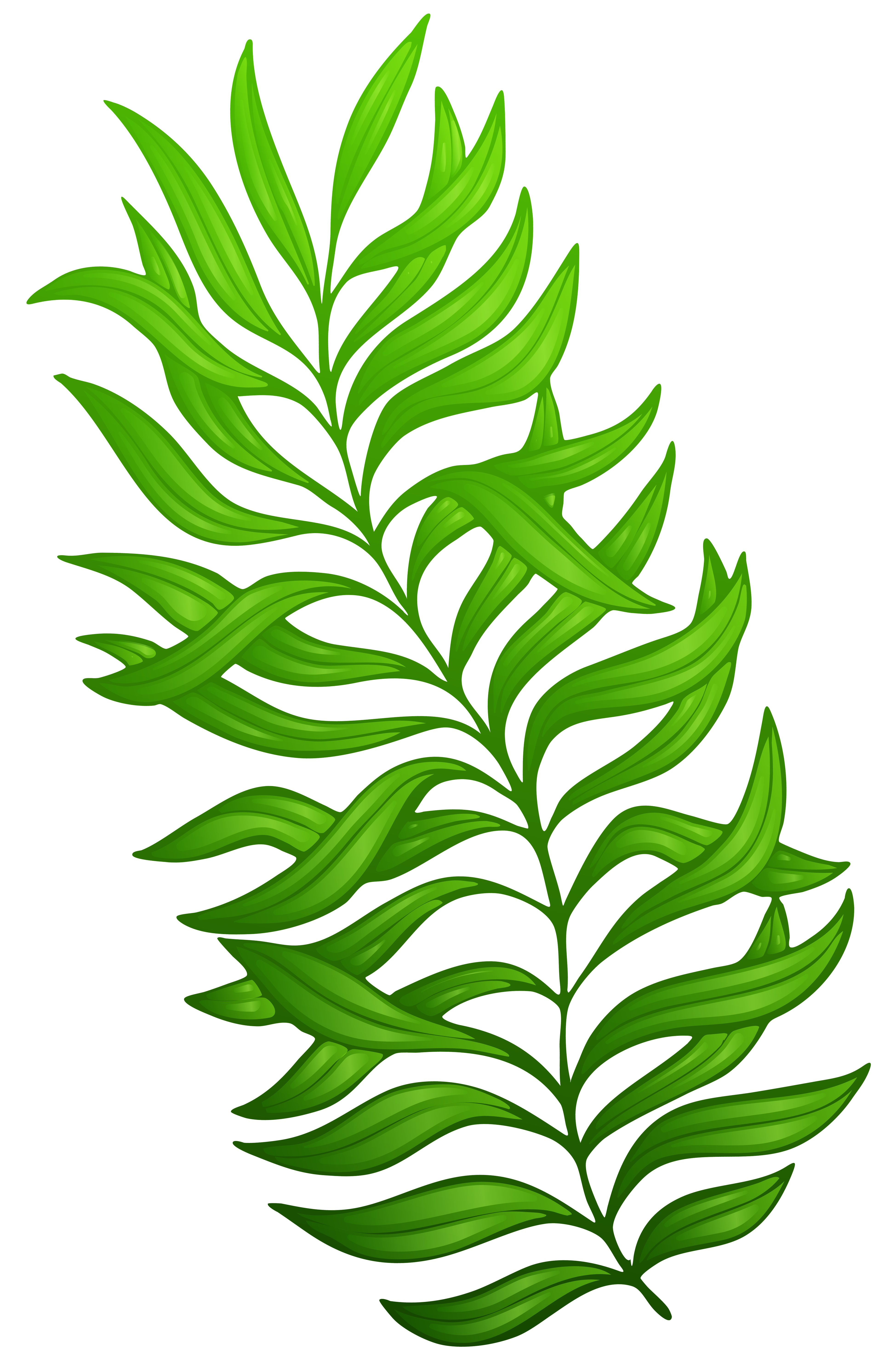 Exotic Green Plant PNG Clipart Image.
