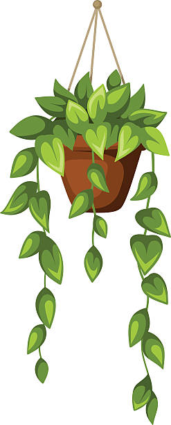 Top 60 Hanging Planter Clip Art, Vector Graphics and Illustrations.