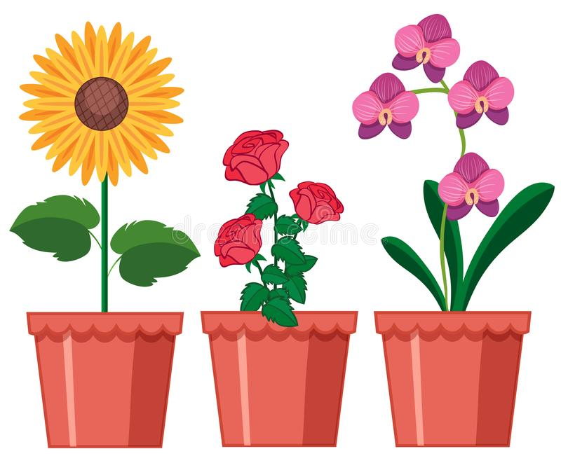 Flower Pot Stock Illustrations.