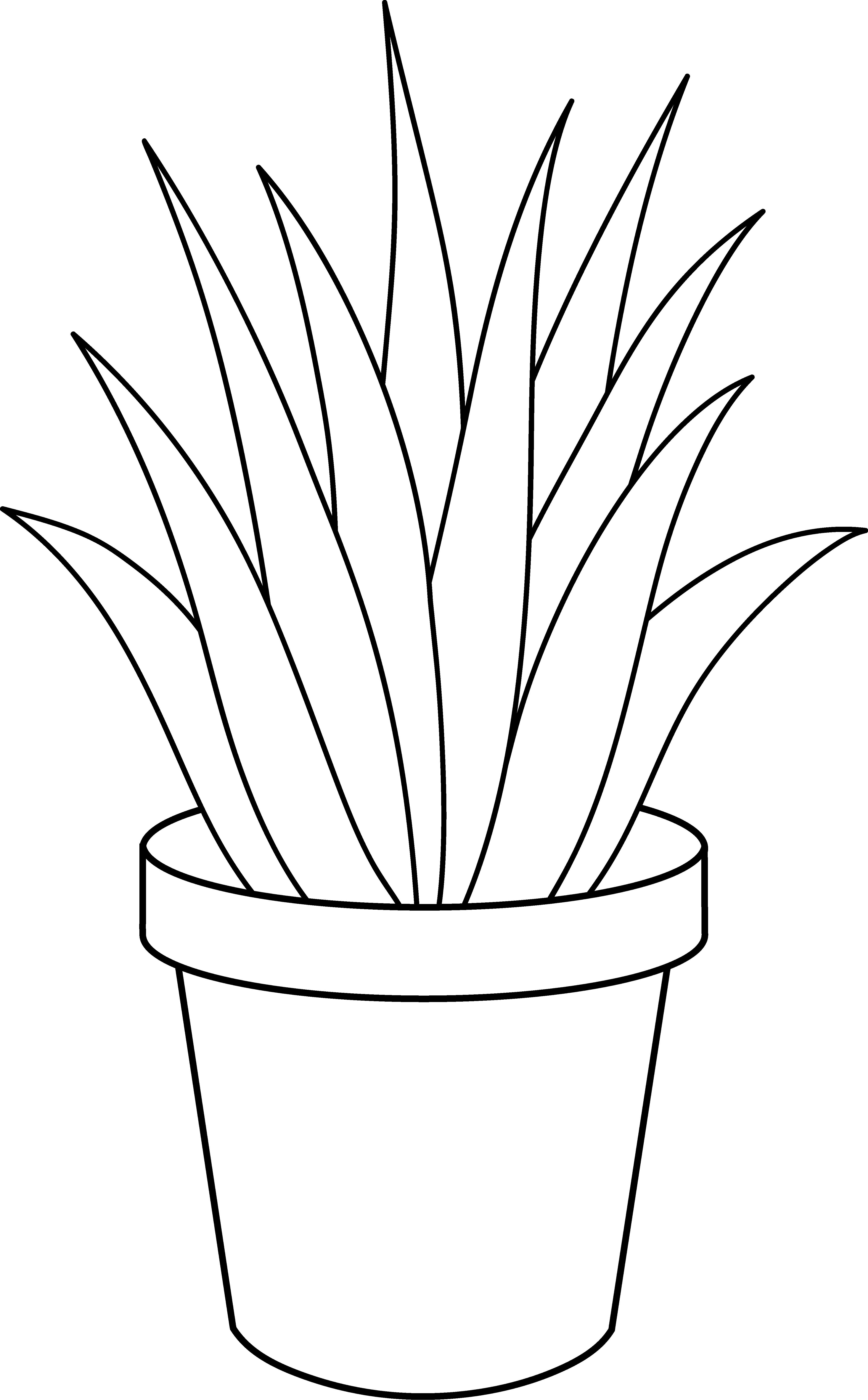 Black And White Plants.