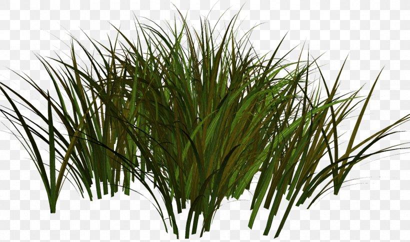 Clip Art Herbaceous Plant Grasses Adobe Photoshop, PNG.