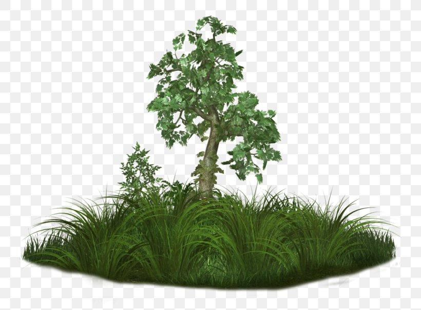 Tree Adobe Photoshop Clip Art Quran, PNG, 800x603px, Tree.