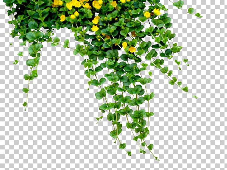Bangladesh Bengali New Year (Pxf4hela Boishakh), Plants Free.