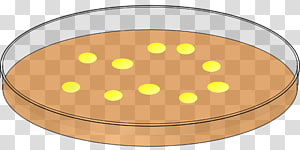 Plates transparent background PNG clipart.