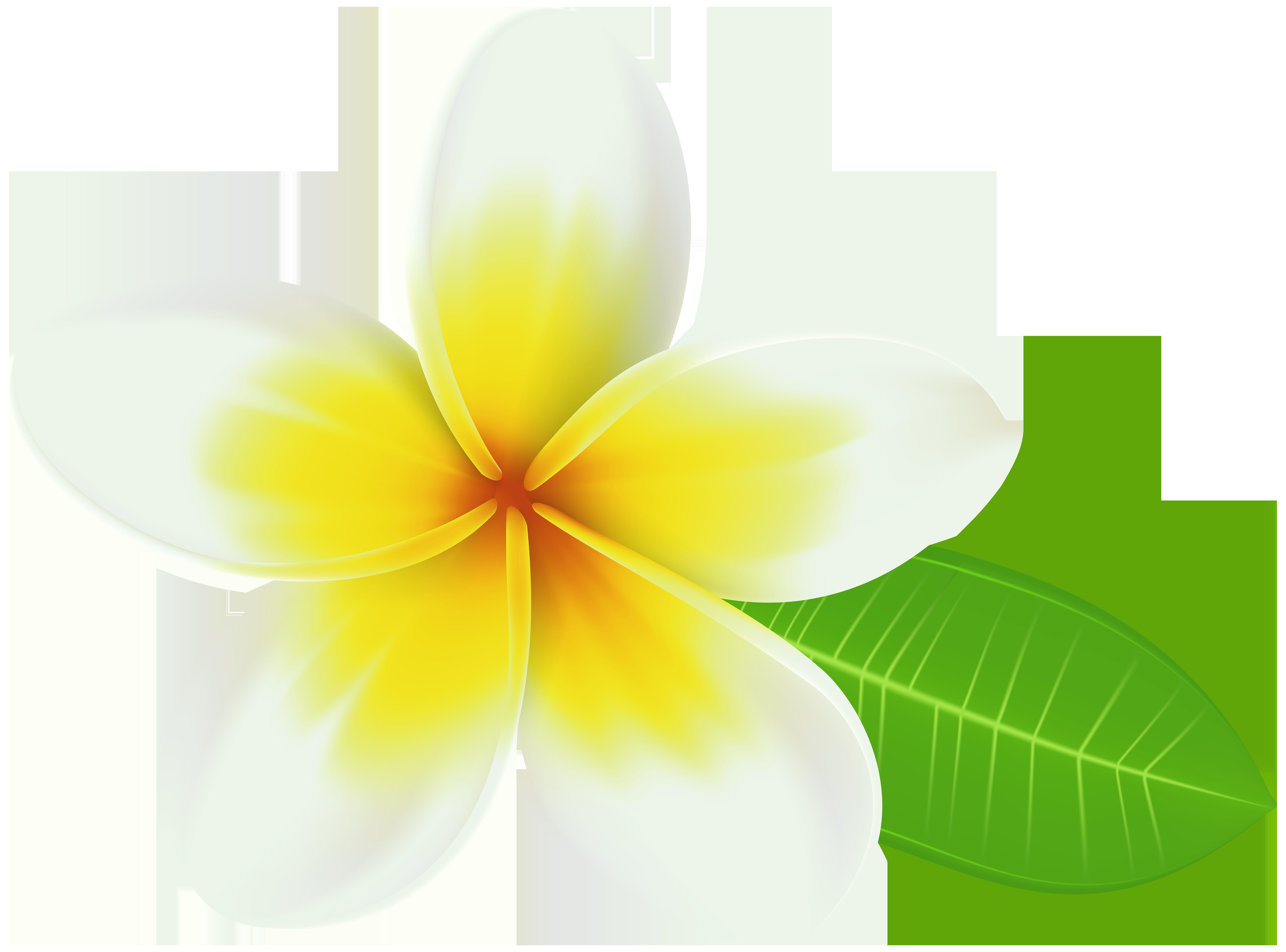 Plumeria PNG Transparent Clip Art Image.