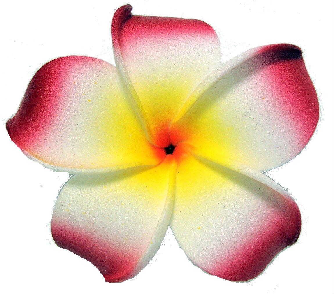 Free Plumeria Cliparts, Download Free Clip Art, Free Clip.