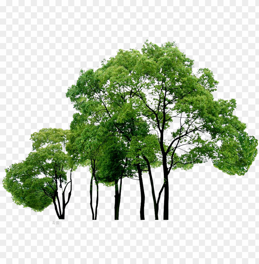 computer tree trees file free png hq clipart.