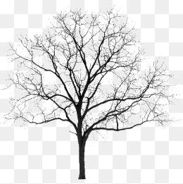Winter Tree Png, Vectors, PSD, And Clipa #133353.