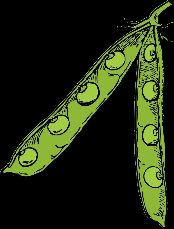 Free Clipart: Pea pod.