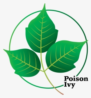 Free Poison Ivy Clip Art with No Background.